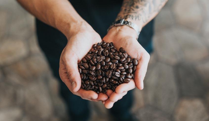 """สิ่งที่คุณควรรู้ เกี่ยวกับ """"เมล็ดกาแฟ"""""""